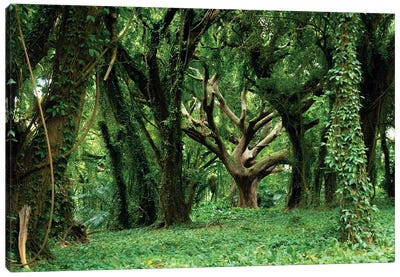 Tree Of Life In Dense Tropical Forest Canvas Art Print