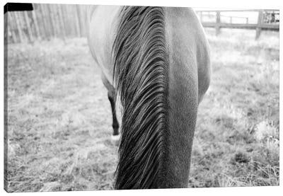 The Horse's Mane Canvas Art Print