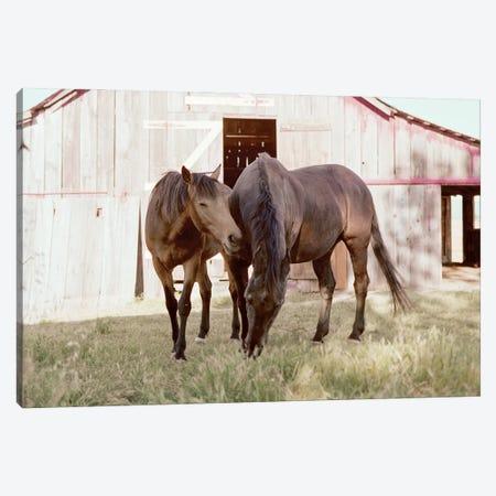 Rescue Horses On The Ranch Canvas Print #RNN59} by Ben Renschen Art Print