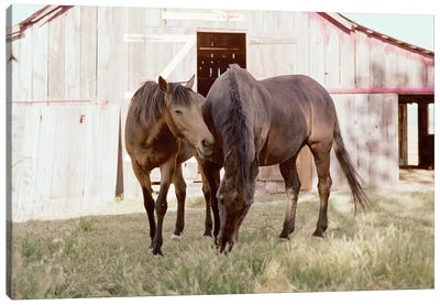 Rescue Horses On The Ranch Canvas Art Print