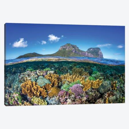 Coral Gardens Lord Howe Island Canvas Print #RNS13} by Jordan Robins Canvas Wall Art