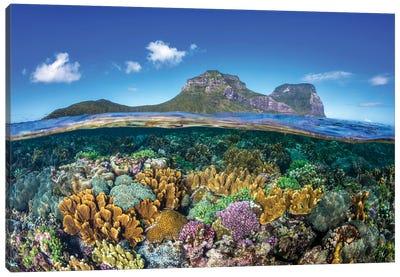 Coral Gardens Lord Howe Island Canvas Art Print