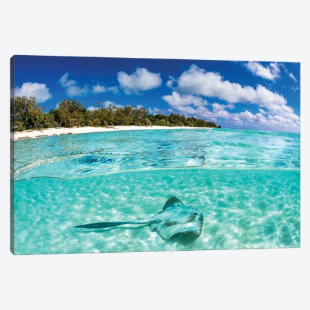 Cowtail Stingray Great Barrier Reef Canvas Print #RNS14} by Jordan Robins Canvas Art Print
