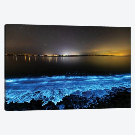 Electric Blue Bio Jervis Bay Canvas Print #RNS17} by Jordan Robins Art Print