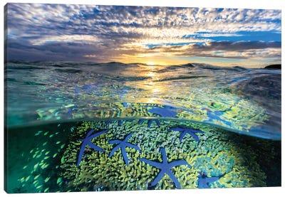 A Sea of Stars Canvas Art Print