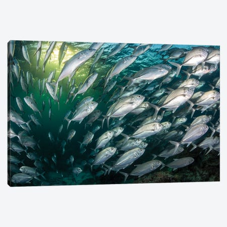 Fish Frenzy. Canvas Print #RNS23} by Jordan Robins Canvas Print