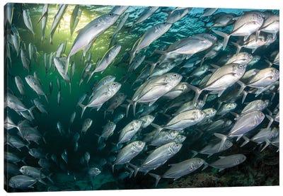 Fish Frenzy. Canvas Art Print