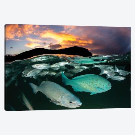 Fish Sunset Lord Howe Island Canvas Print #RNS24} by Jordan Robins Canvas Art