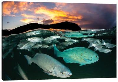 Fish Sunset Lord Howe Island Canvas Art Print