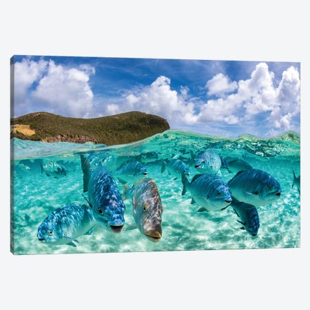Fishy Friends Lord Howe Island Canvas Print #RNS25} by Jordan Robins Canvas Art