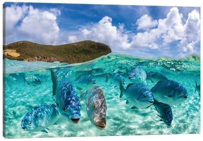 Fishy Friends Lord Howe Island Canvas Art Print