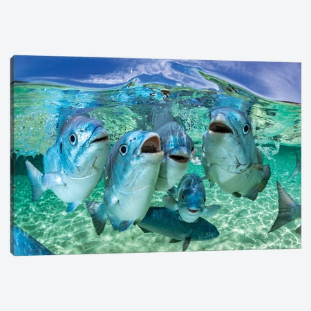 Fishy Karaoke Lord Howe Island Canvas Print #RNS26} by Jordan Robins Canvas Art