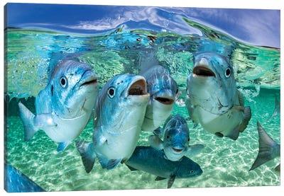 Fishy Karaoke Lord Howe Island Canvas Art Print