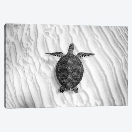 Green Sea Turtle Great Barrier Reef #4 Canvas Print #RNS31} by Jordan Robins Canvas Art