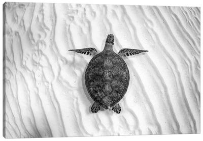Green Sea Turtle Great Barrier Reef #4 Canvas Art Print