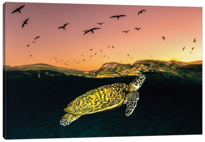 Hawksbill Sea Turtle Sunset Canvas Art Print