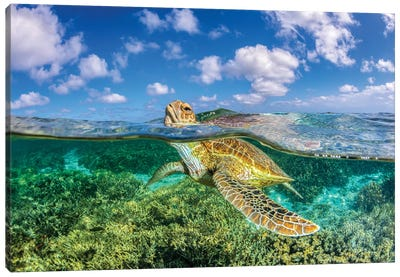 Keep Your Head Above Water Canvas Art Print