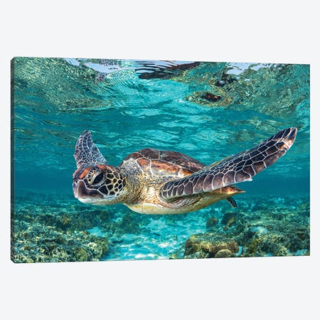 Learn To Fly Canvas Print #RNS38} by Jordan Robins Canvas Wall Art