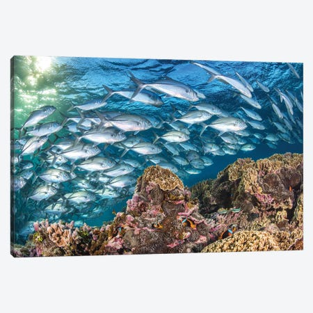 Life on The Reef Canvas Print #RNS39} by Jordan Robins Canvas Artwork
