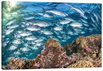 Life on The Reef Canvas Art Print
