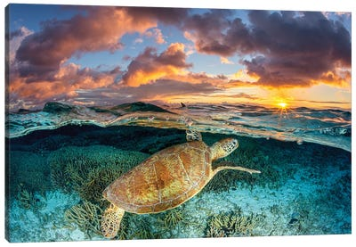 Magic Mornings Great Barrier Reef Canvas Art Print