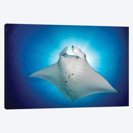 Manta Ray Magic Canvas Print #RNS43} by Jordan Robins Canvas Print