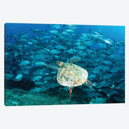 Peak Hour on The Reef Canvas Print #RNS49} by Jordan Robins Canvas Print