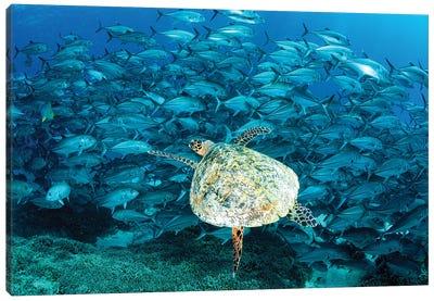 Peak Hour on The Reef Canvas Art Print