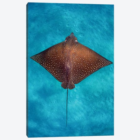 Aqua Blue Eagle Ray Vertical Canvas Print #RNS4} by Jordan Robins Canvas Art
