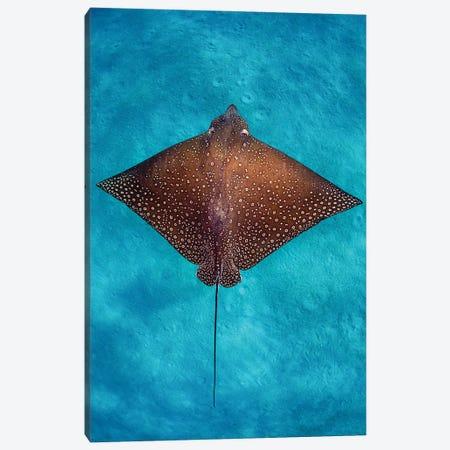 Aqua Blue Eagle Ray Vertical Canvas Print #RNS4} by Jordan Robins Canvas Art