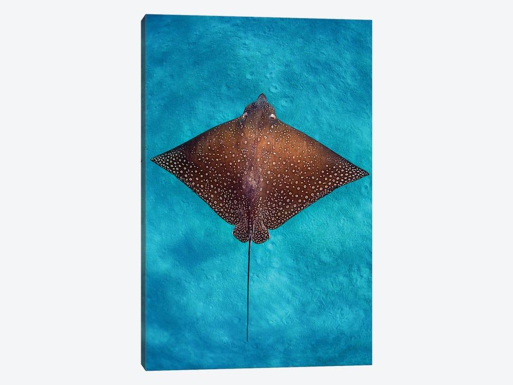 Aqua Blue Eagle Ray Vertical by Jordan Robins 1-piece Art Print