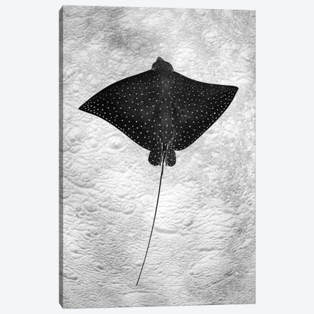 Spotted Eagle Ray Vertical Canvas Print #RNS56} by Jordan Robins Canvas Art Print