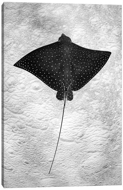 Spotted Eagle Ray Vertical Canvas Art Print