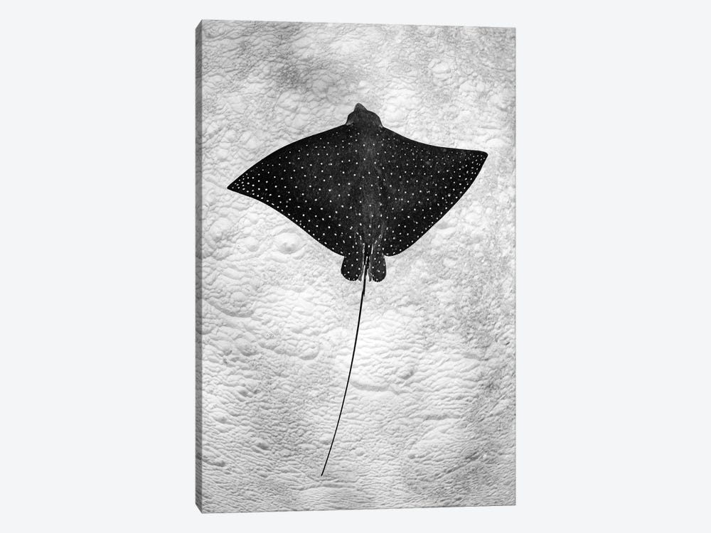 Spotted Eagle Ray Vertical by Jordan Robins 1-piece Canvas Artwork