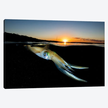 Squid Sunset Canvas Print #RNS57} by Jordan Robins Canvas Art Print