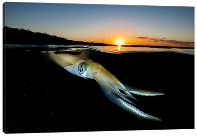 Squid Sunset Canvas Art Print