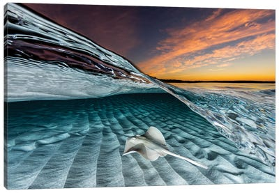 Stingaree Sunset Canvas Art Print