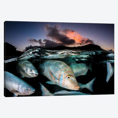 Sunset Fish Frenzy Lord Howe Island Canvas Print #RNS59} by Jordan Robins Canvas Art