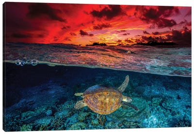 Sunset Swimming Canvas Art Print