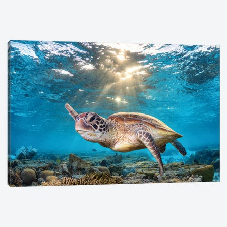 Swimming In The Golden Light Canvas Print #RNS64} by Jordan Robins Canvas Wall Art