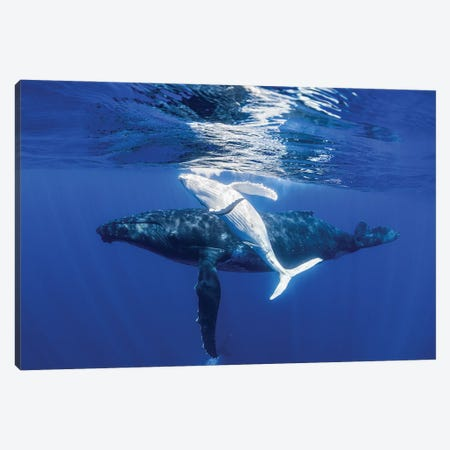 The Dancing Whale Canvas Print #RNS65} by Jordan Robins Canvas Artwork