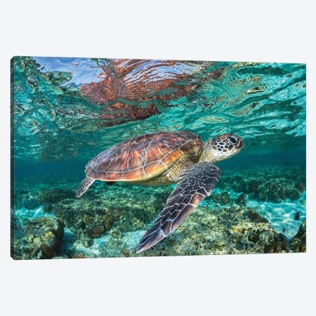 The Reef Wanderer Canvas Print #RNS66} by Jordan Robins Canvas Wall Art