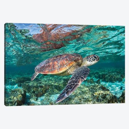 The Reef Wanderer Canvas Print #RNS66} by Jordan Robins Canvas Wall Art