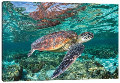 The Reef Wanderer Canvas Art Print