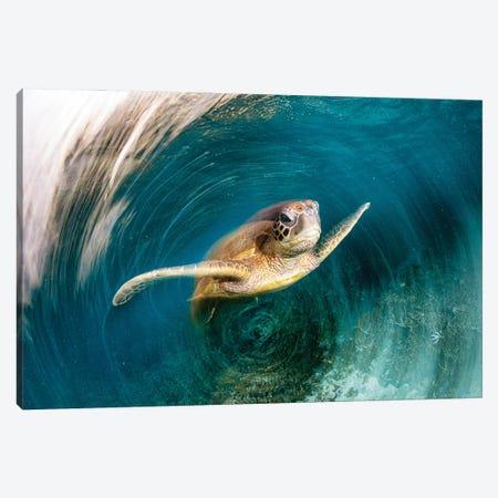 Turtle Swirl Canvas Print #RNS68} by Jordan Robins Art Print