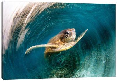Turtle Swirl Canvas Art Print