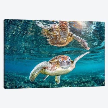Turtle Wink Canvas Print #RNS69} by Jordan Robins Canvas Print