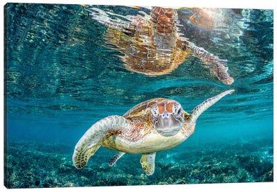 Turtle Wink Canvas Art Print