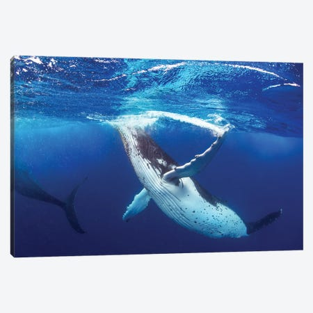 Whale of a Time Canvas Print #RNS72} by Jordan Robins Canvas Wall Art