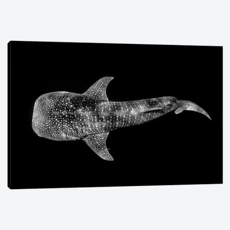 Whale Shark Ningaloo Reef Canvas Print #RNS73} by Jordan Robins Canvas Artwork